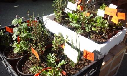 Plantas de Xela